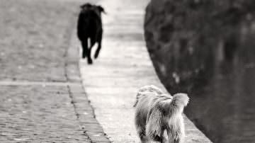 Sicilia: La Lav indagherà sull'affidamento irresponsabile dei cani che hanno azzannato e ucciso un bambino in Provincia di Ragusa