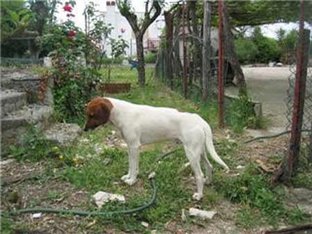 Sicilia: La Lav diffida Prefettura, Procura della Repubblica e Asl di Modica dal sopprimere i cani randagi
