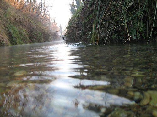 Fao: L'uso sicuro delle acque reflue in agricoltura offre diversi vantaggi