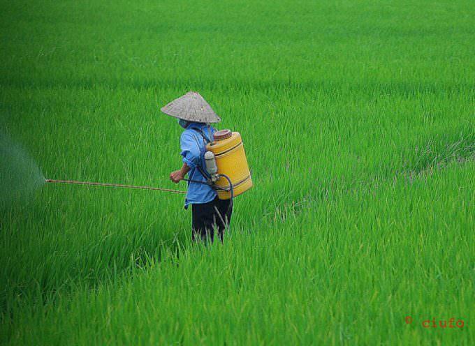 Giappone: Disoccupati a lavorare nei campi per combattere la crisi economica