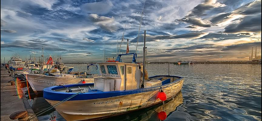 Nessuna chiusura anticipata per la pesca al Tonno rosso
