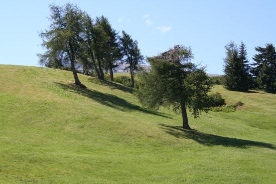 Alberi in festa: piantumazione di alberi autoctoni