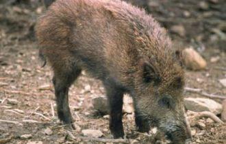 CIA, danni alle coltivazioni provocati dalla fauna selvatica, un problema da risolvere