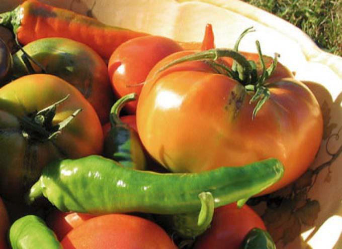 Crisi agricoltura: Bruxelles non può sottovalutare la situazione del nostro settore