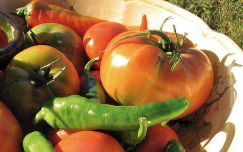 G8, Marini (Coldiretti): ha vinto il modello agricolo italiano