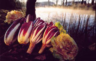 16 dicembre, il radicchio rosso è fiore d'inverno a Treviso