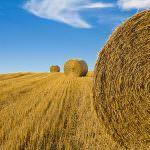 Pac: La riforma agricola al servizio dei cittadini