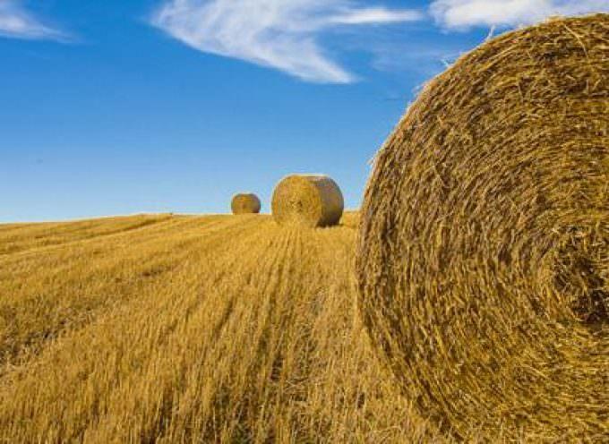 Agricoltura: bene la proposta Ue di stoccaggio per l'olio d'oliva