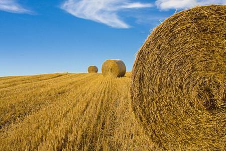 Agricoltura: Bruni (Fedagri), le cooperative per una nuova agricoltura competitiva