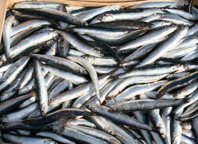 """""""A rischio acciughe di Sicilia"""". I pescatori contro le volanti a coppia"""