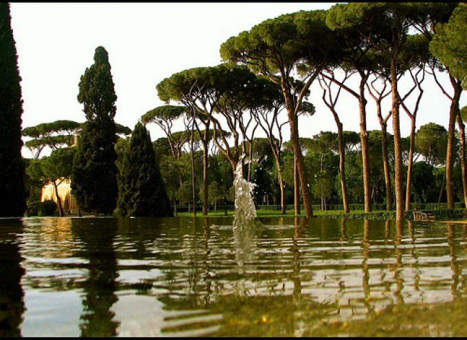 Roma, ancora manifesti inneggianti potature di migliaia di alberi