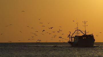 Mangiare pesce senza danni per l'ambiente? Oggi si può!