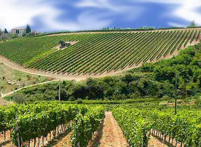 Vignaioli & Vignerons: Nasce il 'Manifesto europeo della vitivinicoltura sostenibile'