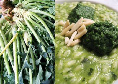 Vicenza: La città dona Semi di Broccolo fiolaro di Creazzo per l'orto della Signora Obama