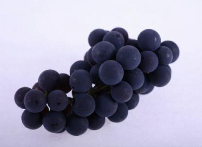 Appassimento delle uve e qualità dei vini: l'identità varietale