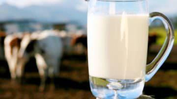 """Coldiretti, allevatori: """"Sciopero del latte"""""""