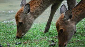 Danni della fauna selvatica