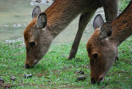 Bologna: Cia – Ridotti del 50% i danni da fauna selvatica