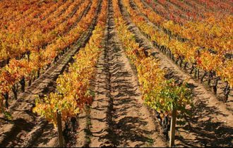 Nell'Estate di San Martino, l'Italia gusta il vino novello