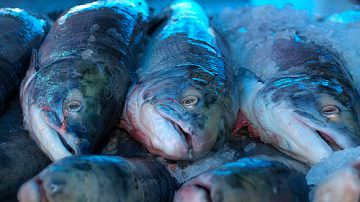 Pesca: Partono i nuovi regolamenti, con multe da 6 mila euro fino all'arresto