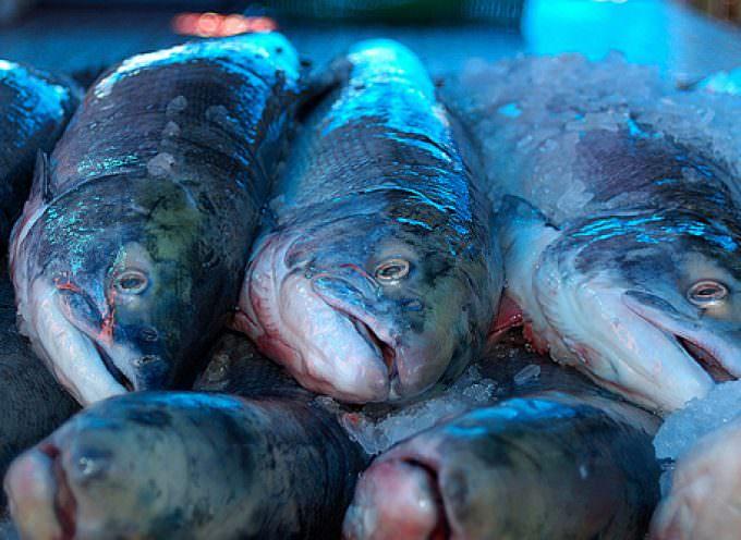 La lampuga e la spatola, In Liguria si mangia il pesce ritrovato