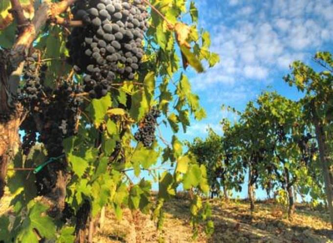La Regione in Vigna: L'evento che promuove il prodotto enogastronomico lombardo