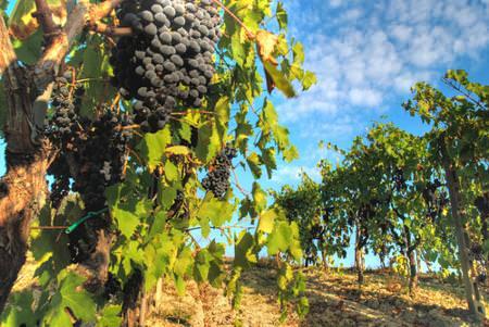 Massa carrara: Imprese agricole – Il 15 maggio scade il termine per allacciarsi all'acquesotto agricolo del Candia