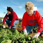Agricoltura, il futuro è rosa