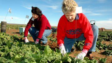 Voucher e previdenza agricola, il governo convoca le parti sociali