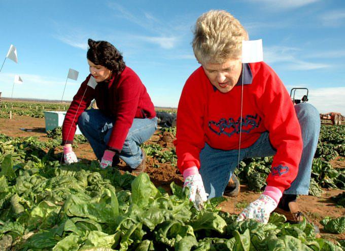 "Voucher alle casalinghe, Uila: ""Diritti negati a 200 mila lavoratrici agricole"""