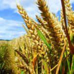 UE: bilancio 2014, l'agricoltura esce indenne