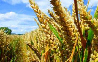 Per archiviare la crisi dell'agricoltura serve una politica di sviluppo unitaria regionale