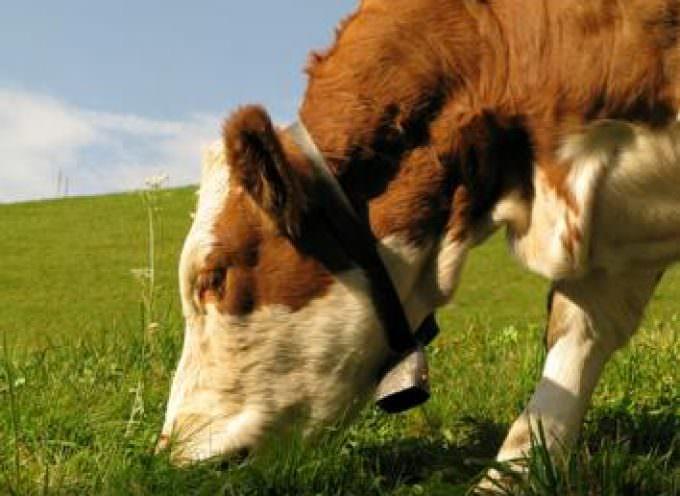 """Crisi del latte: Fallisce la trattativa, sarà nuovamente """"guerra""""?"""