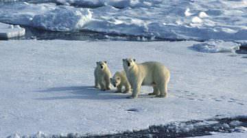 G8 Ambiente, strategie e richieste della coalizione In marcia per il clima