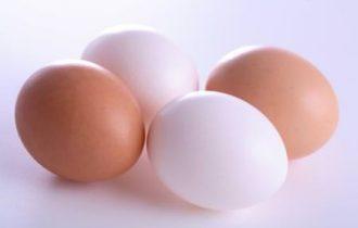 USA. La salmonella nelle uova porta alla luce i problemi del sistema