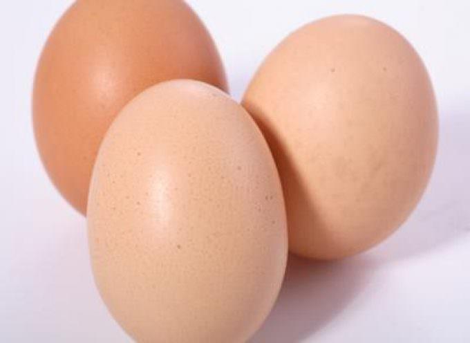 L'allergia alle uova? Si cura con le uova