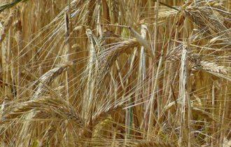 """Caltagirone: Nuova sede della """"Struttura di ricerca e sperimentazione per colture erbacee mediterranee"""""""