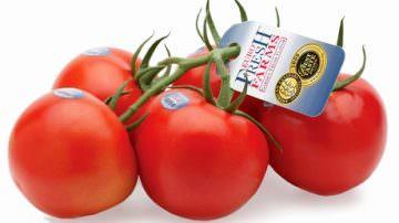 USA: Eurofresh Farms si aggiudica il premio per il miglior pomodoro 2009