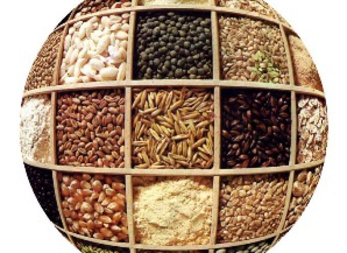 Cereali: produzione in forte calo (-23 per cento), per il grano duro è drammatico crollo (-40 per cento)