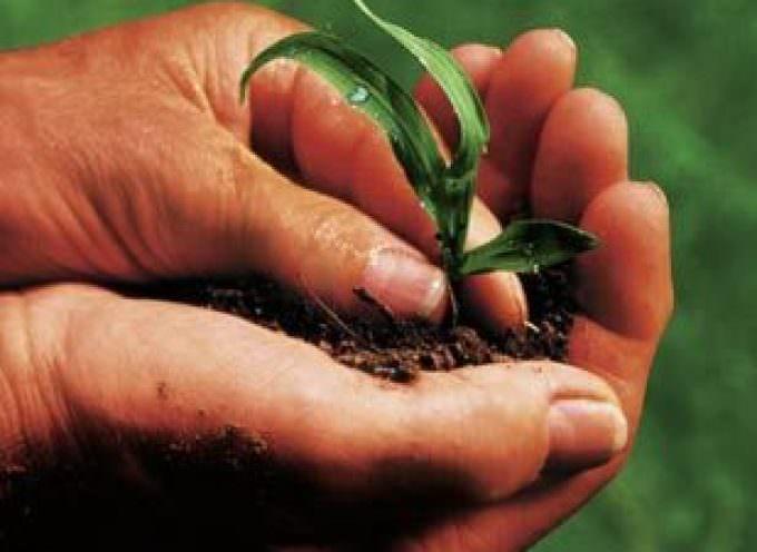 Il futuro dell'agricoltura è nel suo passato, con la semina diretta