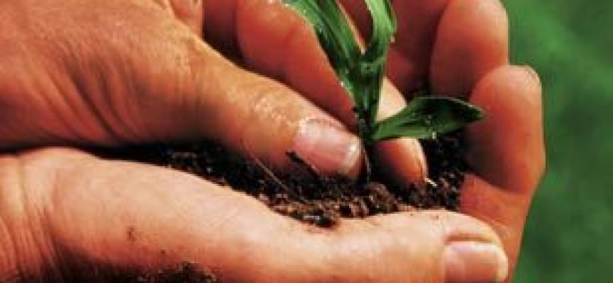 "Agricoltura, da cinque sigle nasce ""Agrinsieme"""