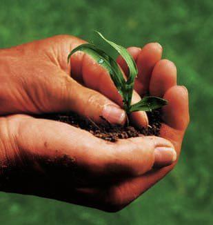 Greenpeace presenta: 'Agricoltura al bivio'