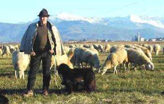 """LACTITALIA, """"pecorino sardo"""" prodotto in Romania: cosa dice SIMEST, la finanziaria"""