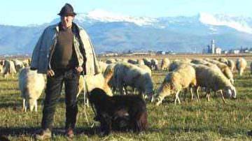 Sardegna: Protesta dei pastori