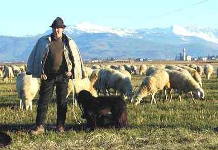 Terremoto: Coldiretti, dopo i paesi scompaiono i pastori