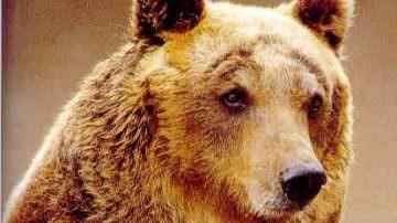 Niente banchetto ma sequestro per la carne d'orso. Ora si rischia la multa