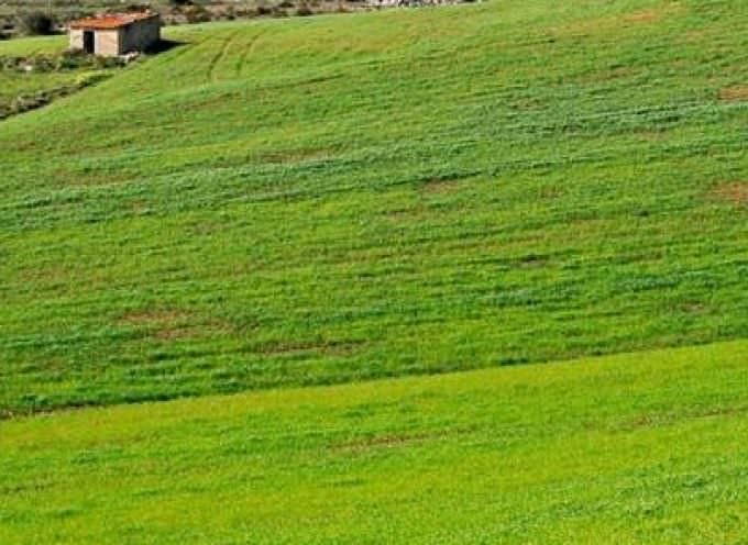 Agrofarma promuove l'agricoltura sostenibile e la lotta alla fame nel mondo