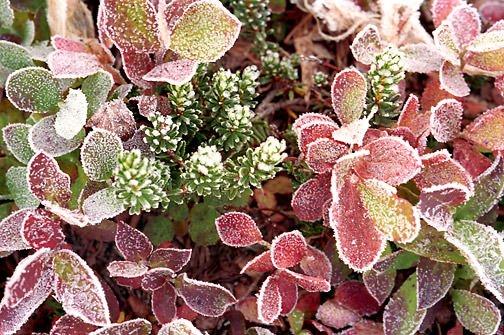 Gelo minaccia piante in terrazzo, come salvarle
