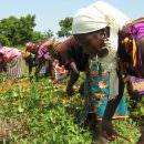Cibo, ambiente, diritti: la classifica di Oxfam