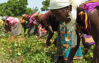 Fao: L'Africa tira il mercato bio ed equo-solidale